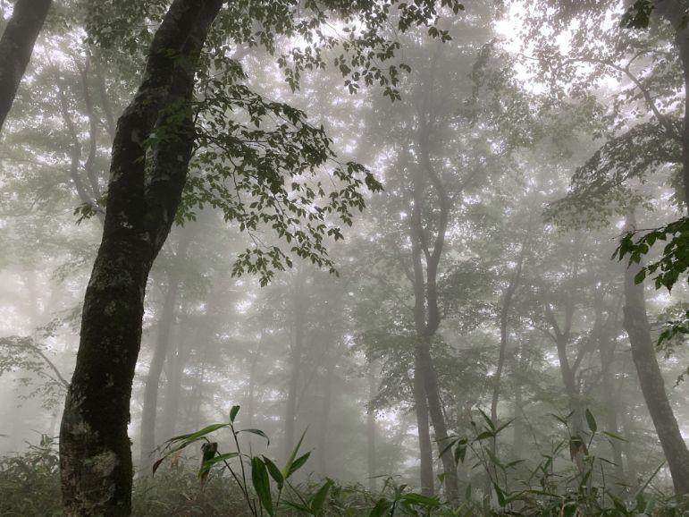 霧の中の岩部岳
